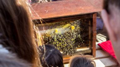 Warsztaty pszczelarskie w książenickim arboretum