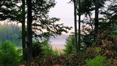 Na zdjęciu widać las