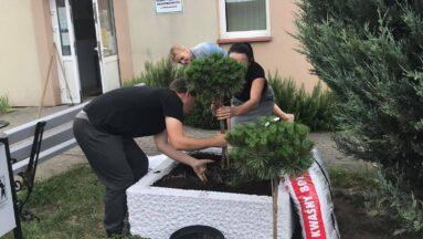 Trzy osoby przy pracy - sadzeniu roślin w donicach