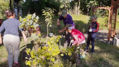 Na zdjęciu widać rodziny pracujące w ogrodzie