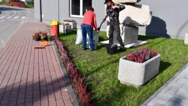 osoby wspólnie ozdabiają ogród wrzosami