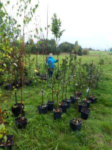 sadzenie wysokich roślin wzewnętrznych donicach